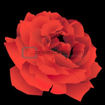 3D Red Rose
