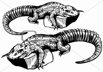 Alligator Sketch - black and white