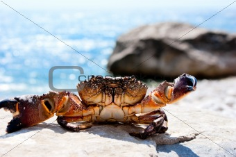 Basking crab