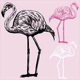 Flamingo Drawing