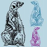 Meercat Sketch