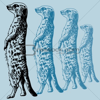 Meercat Standing Drawing
