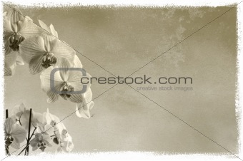 background floral background with orchids on rough texture with place for text or image