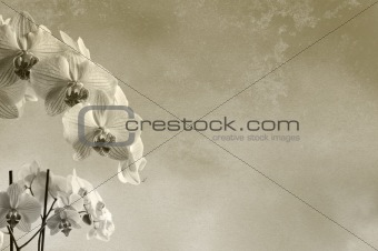background floral composition with orchids and rough texture with place for text or image