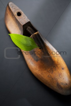 Green leaf on wood shoe