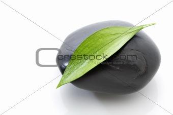 Green leaf on black stone