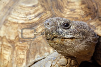 Close up of a tortoise's head and eyes