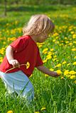 boy 2,5 years, with long hair, sitting in a dandelion field