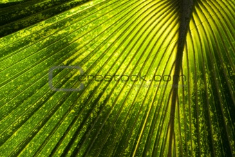 Abstract Jungle Background