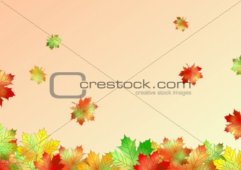 autumn maple leaves made in illustrator cs4