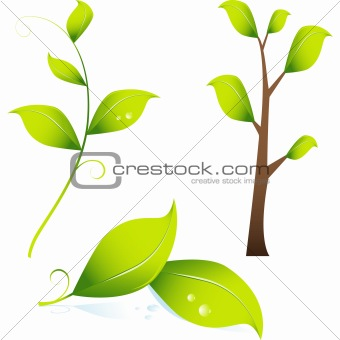 3D Image of Branch / Leaves
