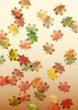 falling maple leaves made in illustrator cs4