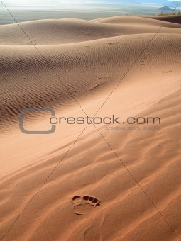 Sand dunes in the Kalahari desert