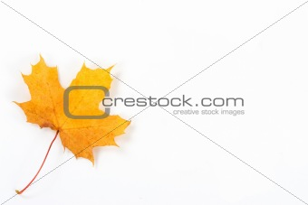 a beautiful yellow leaf from autumn forest