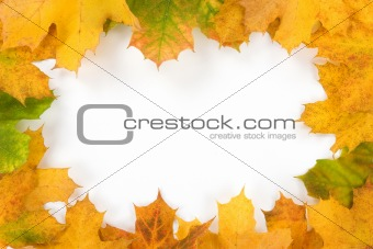a colourful frame made from autumn leaves