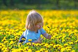 boy with long blond hair sitting in a dandelion field