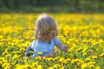 boy with long blond hair sitting in a dandelion field