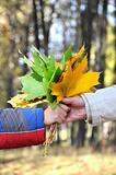 The hand holding a bouquet from autumn maple leaves