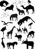 silhouette view of wild animals, wildlife, birds