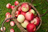 Organic apples in basket