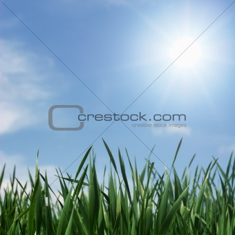 Green leaves in springtime