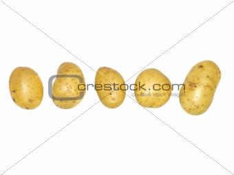 Potatoes on a row
