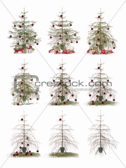 Time lapse - Christmas tree
