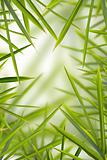 Bamboo Shhot Backround