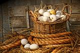 Basket of eggs on straw