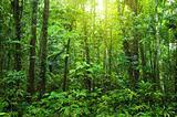 Dense forest.