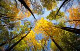 autumn forest / bright colors of leaves / sunlight