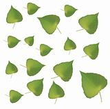Fresh green leafs texture