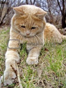 Cat Levik