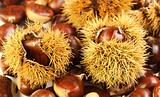 chestnuts, nature background