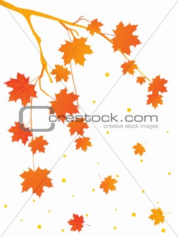 autumn tree branch, illustration