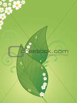 background with blossoms, leaves