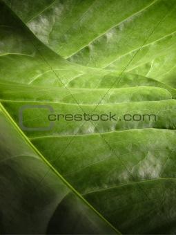 green leafy landscape
