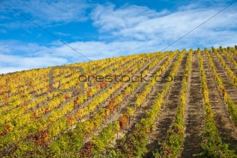 Douro Vineyards