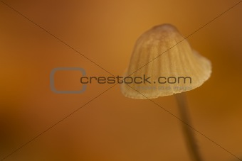a mushroom in autumn against a brown and orange background