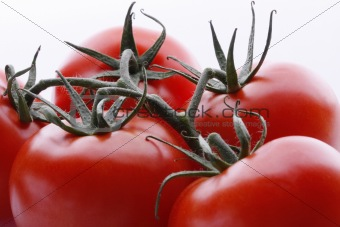 tomatos close-up