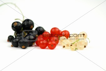 Black, Red and White Currant