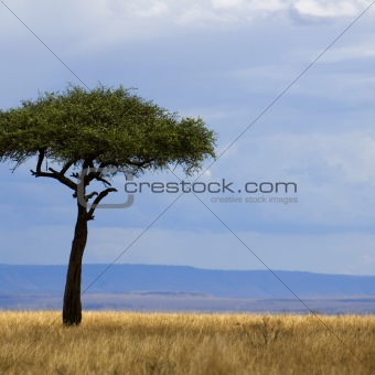 Savannah Masai mara