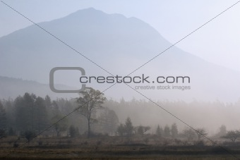 Tree and Mountain in the Mist