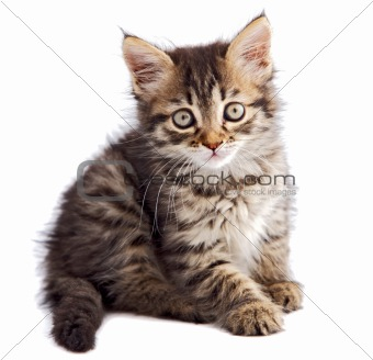 adorable small cat on white bottom