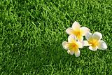 grass background & flowers