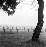 mist at cemetery