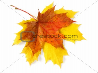 pair of autumnal leaves