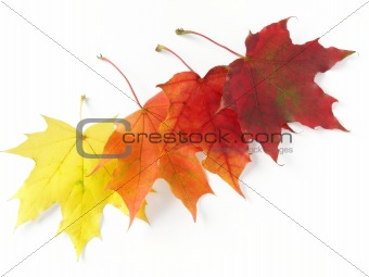autumnal leaves palette