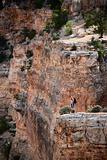 Man standing near the edge of the Grand Canyon