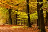 Lush forest in the Netherlands in autumn colors